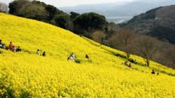 spring_03a